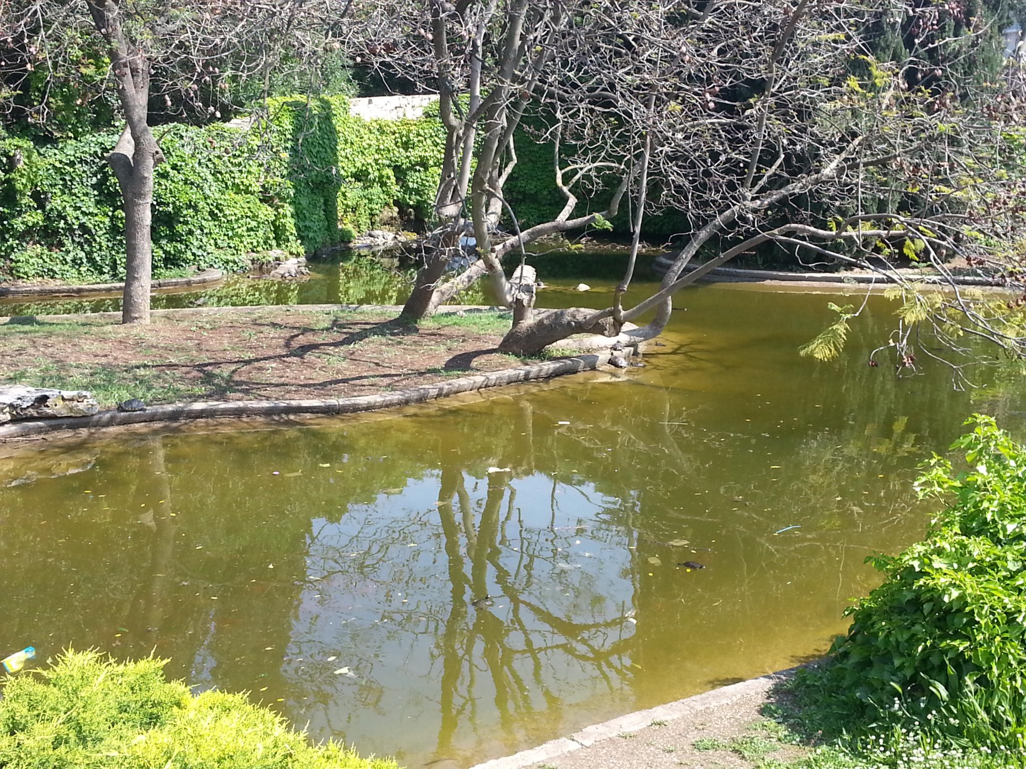 Lago di parco 2 giugno sporco la denuncia del m5s for Pulizia laghetto