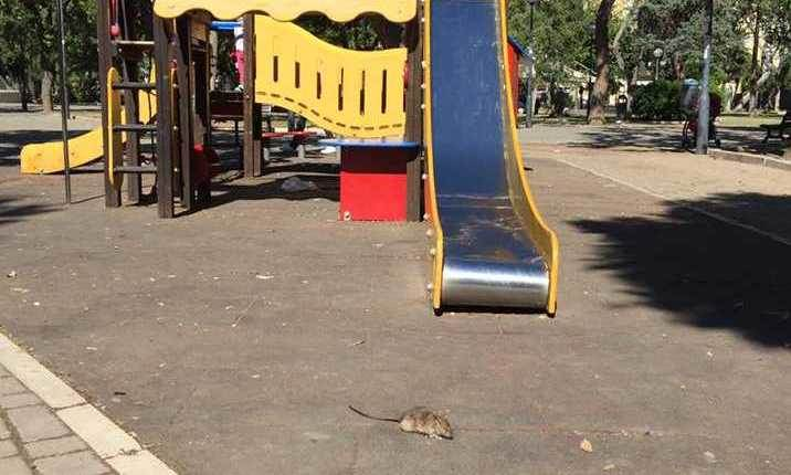 Topi In Piazza Garibaldi