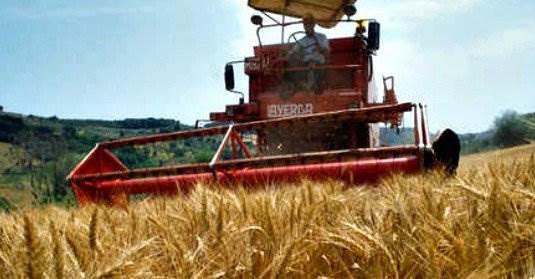 Guerra del grano, Coldiretti: a rischio 3mila aziende