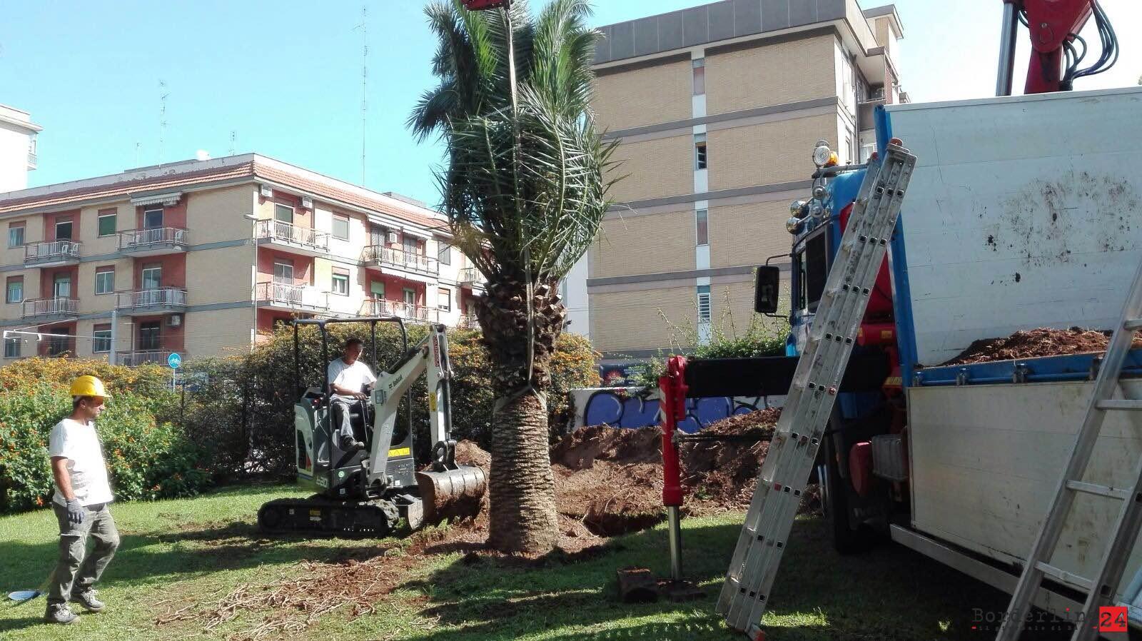 Via Sparano, le prime palme reimpiantate al Parco 2 Giugno