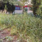 Il giardino interno dell'istituto non curato