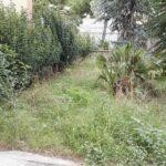 Un'altra area verde non curata dell'istituto