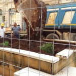La palma rimossa dagli scavatori