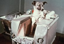 Ask Animals In Space