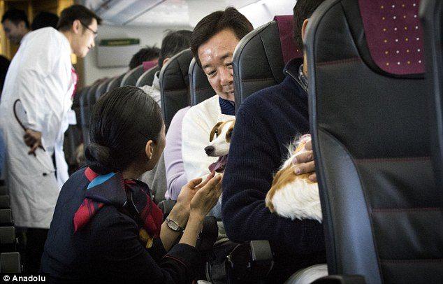 cane a bordo aereo