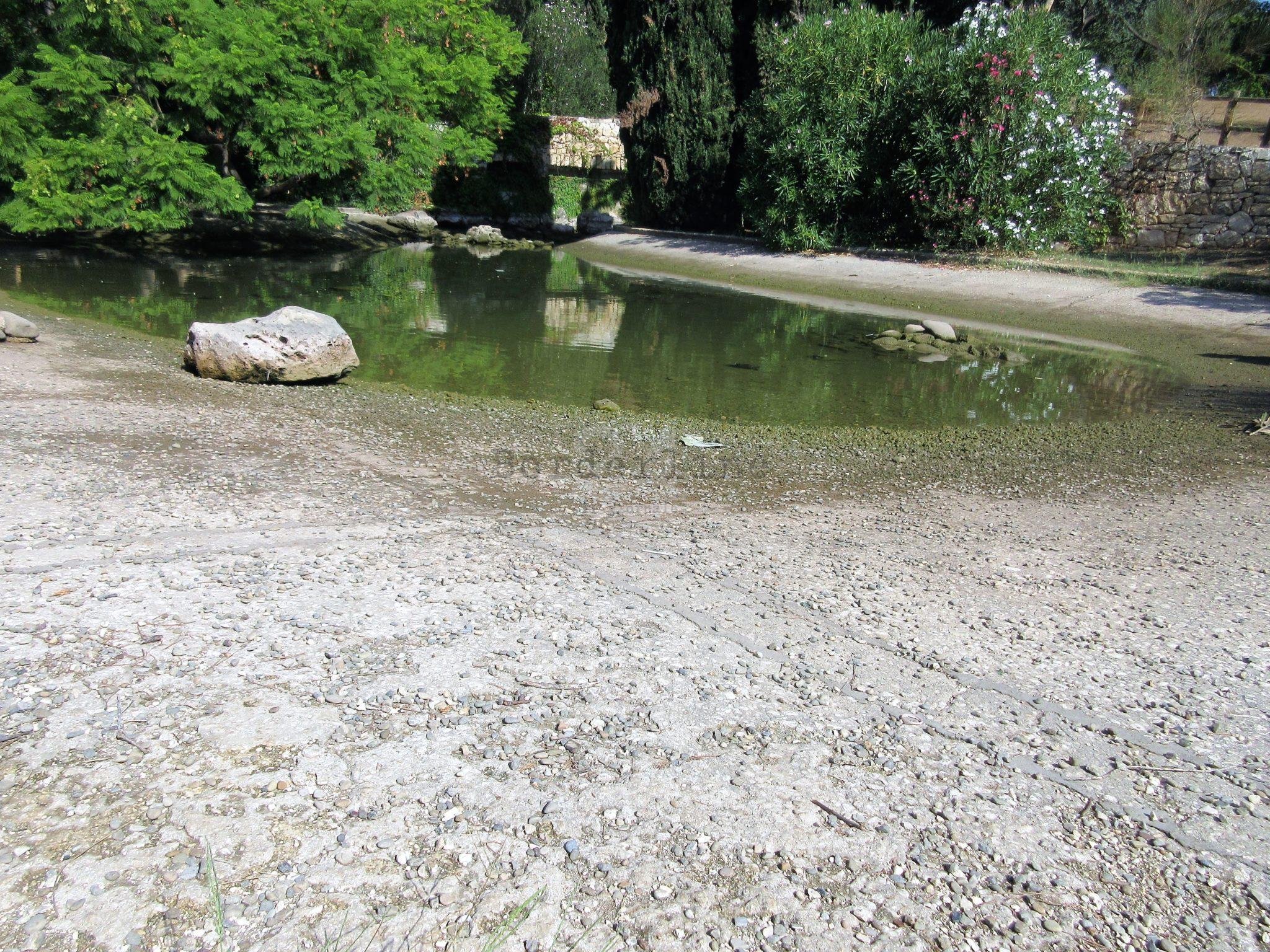Bari a secco il laghetto di parco 2 giugno annaspano for Animali laghetto